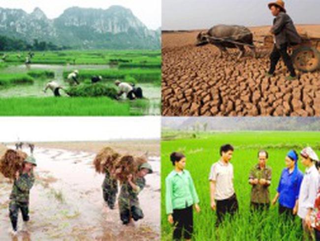 Bảo hiểm nông nghiệp vẫn gặp nhiều vướng mắc