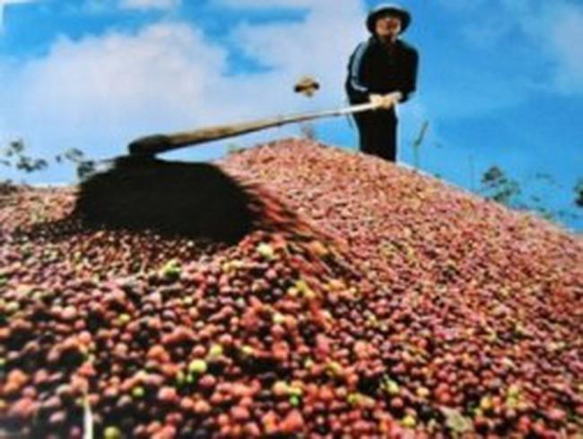Cà phê Việt Nam đang dần mất thị phần
