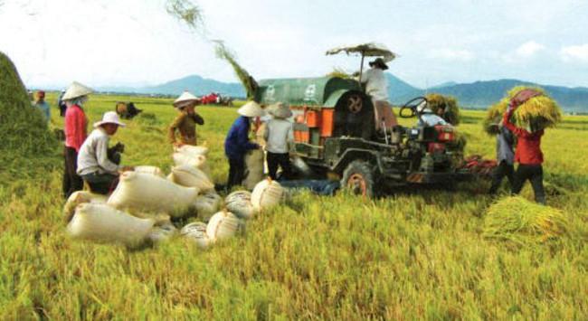Mô hình nông dân là cổ đông của DN: Không dễ để thành công