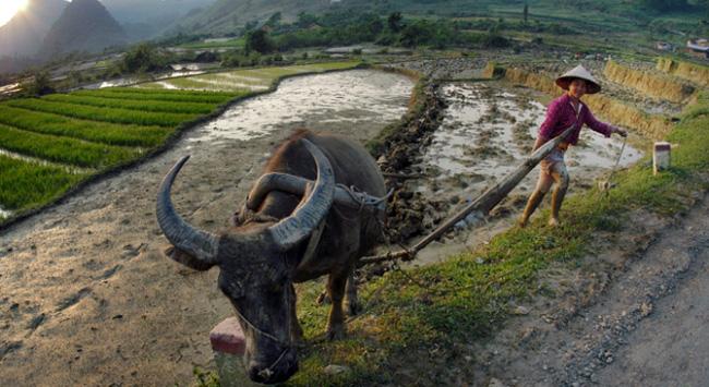 Vì sao chỉ 7% dân nông thôn hài lòng với cuộc sống?
