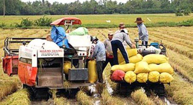 Tái cơ cấu, tạo chuyển biến mạnh mẽ nông nghiệp
