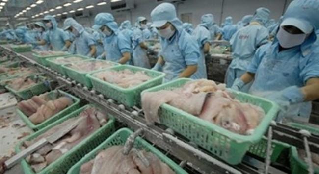 Người nuôi cá tra và doanh nghiệp lúng túng với Nghị định 36