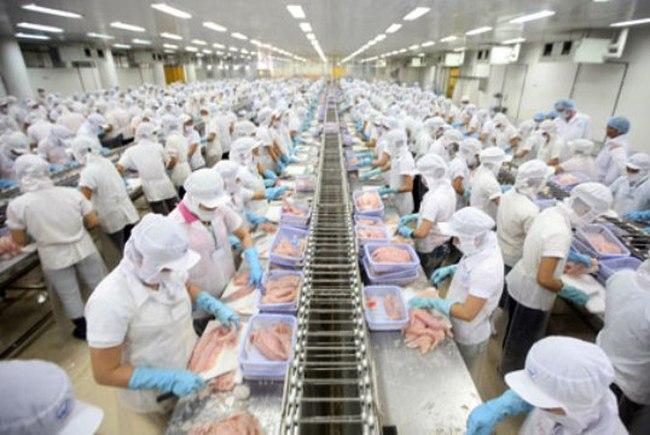 Luật Farmbill 2014: Cá tra Việt Nam sẽ gặp khó