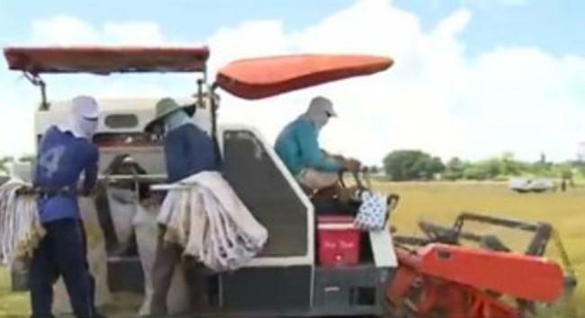 Tái cơ cấu ngành lúa gạo, tạo chuỗi liên kết sản xuất bền vững