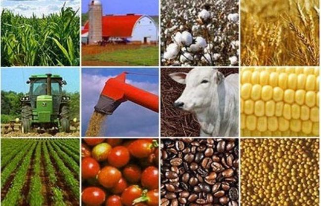 """Giải trình tái cơ cấu nông nghiệp: """"Nóng"""" vấn đề nâng cao chất lượng sản phẩm"""
