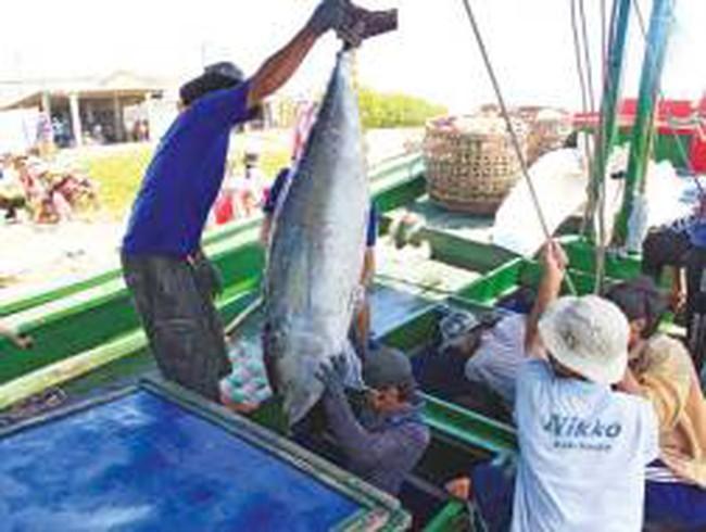 Đánh bắt cá ngừ đại dương bằng tấm lưới... vá