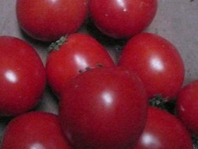 Cà chua chín đỏ đẹp nhờ hóa chất lạ