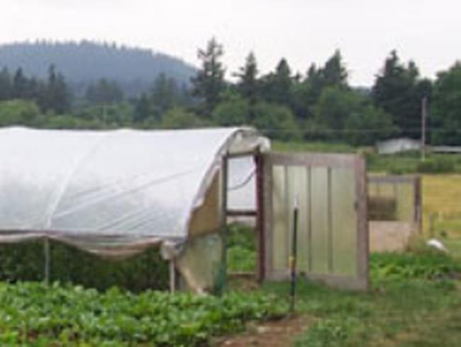 Khu nông nghiệp công nghệ cao Củ Chi đã đi vào hoạt động