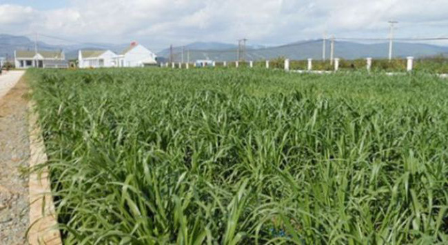 2 trang trại cua Vinamilk đạt ISO 9001:2008