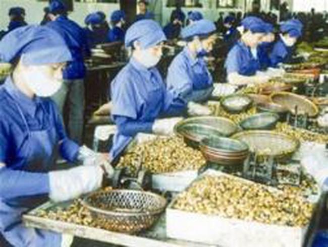 Nguy cơ Trung Quốc cấm nhập khẩu điều Việt Nam
