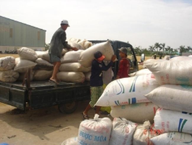Xuất khẩu gạo:  Doanh nghiệp vật vã cạnh tranh giá rẻ