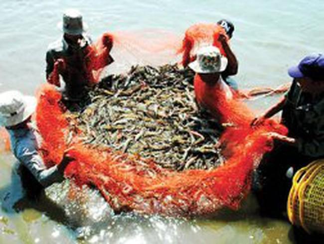 Xuất khẩu thủy sản: Kỳ vọng vào những tín hiệu mới