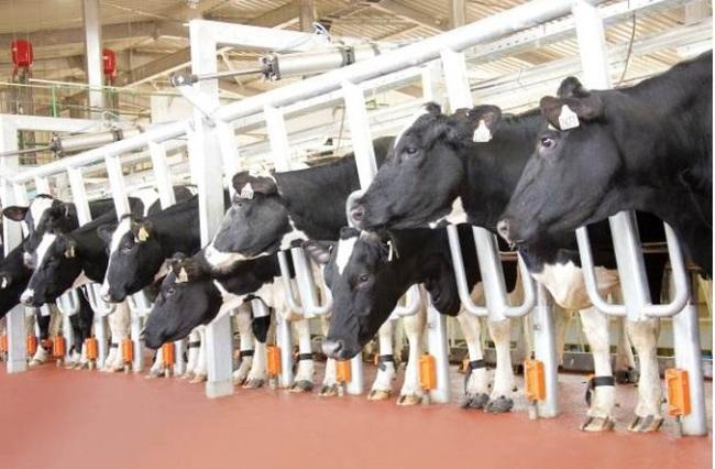 Câu chuyện lớn về sữa của doanh nghiệp và người tiêu dùng