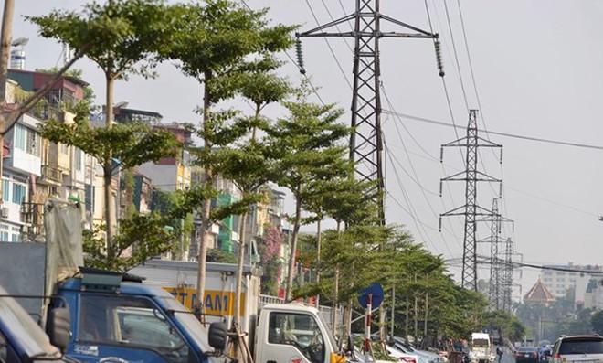 Hà Nội: Lo ngại về hàng cây xanh trồng dưới đường điện cao thế