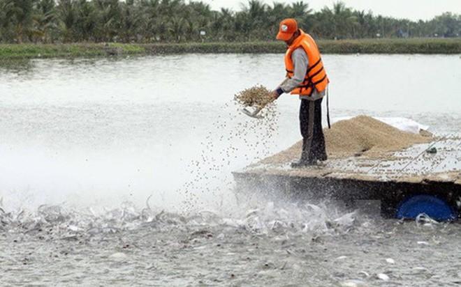 Tổng cục Thủy sản nói gì về vụ 800 giấy phép thủy sản khống?