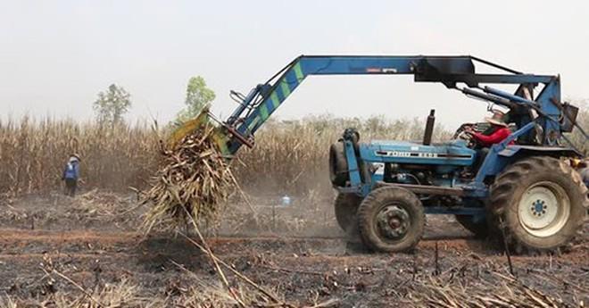 Vì sao Thái Lan luôn lấn lướt Việt Nam trong sản xuất và kinh doanh mía đường?
