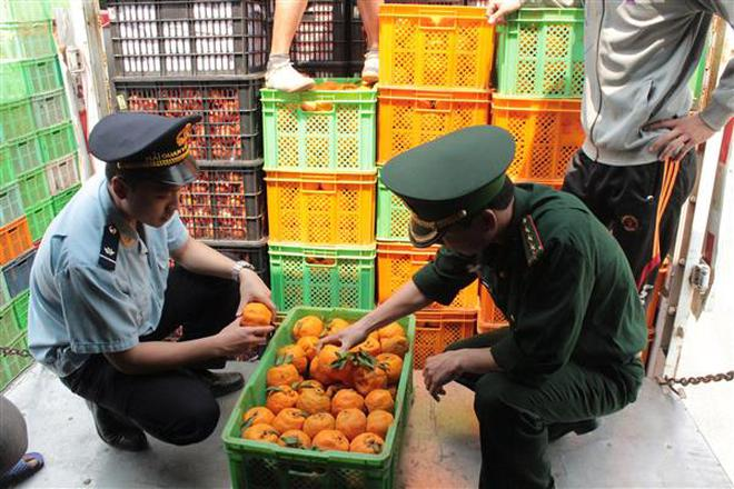 Nhập khẩu rau quả tăng tới 42%