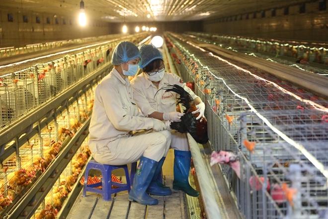 Chăn nuôi phải ra biển lớn, hướng tới thị trường 7 tỉ dân của thế giới