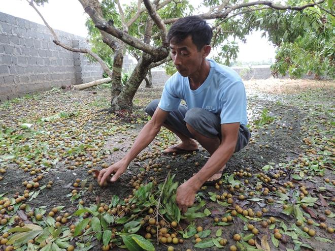 Bão số 1 tàn phá nông nghiệp các tỉnh vùng đồng bằng sông Hồng nặng nề