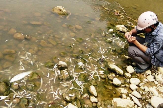 Cá chết trên sông Âm do nước thải chế biến lâm sản