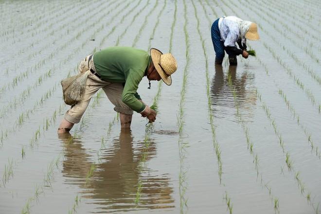 Thiếu lao động phổ thông trầm trọng, Nhật Bản tìm đến lao động bất hợp pháp