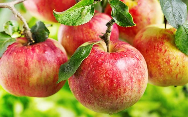 Giảm thiểu nguy cơ ung thư nhờ ăn loại quả này mỗi ngày