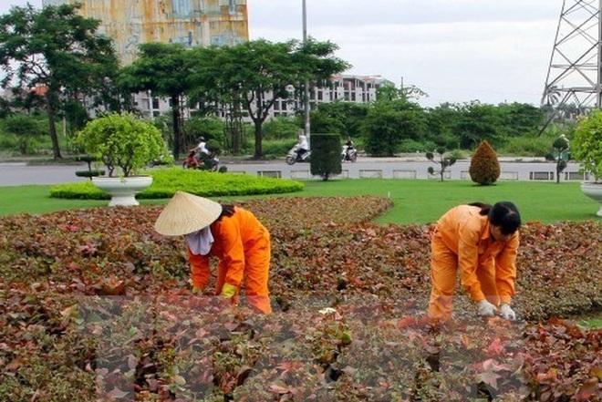 Hà Nội dừng cắt tỉa thảm cỏ, vườn hoa, 6.000 lao động sẽ mất việc