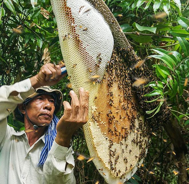Cà Mau đề nghị đính chính thông tin 85% mật ong U Minh Hạ pha đường