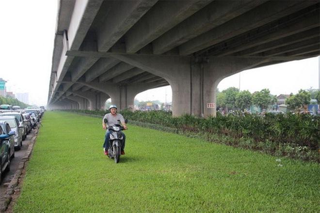 Hà Nội: Chăm sóc cỏ ở... gầm cầu cũng tốn nhiều chục tỉ