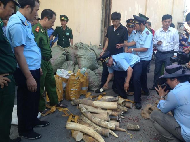 Rầm rộ nhập lậu ngà voi vào Việt Nam