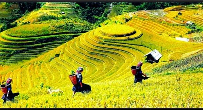 Người nước ngoài xem Việt Nam là nơi đáng sống hơn cả Singapore và Hong Kong