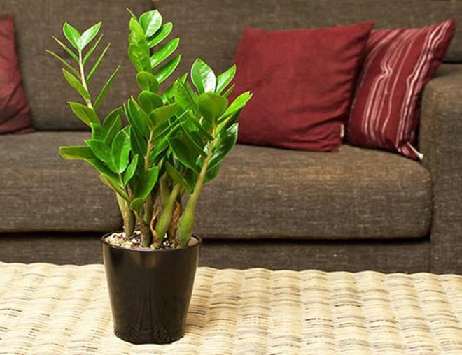 Trồng cây gì ở phòng khách để nhanh phát tài?