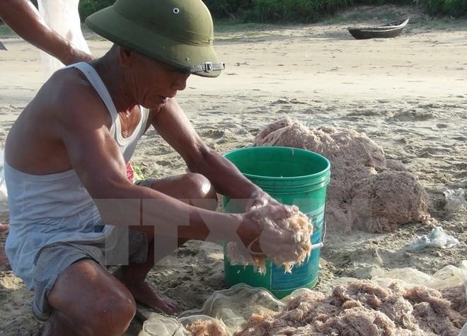 Ngư dân Quảng Bình khai thác hàng chục tấn ruốc biển mỗi ngày