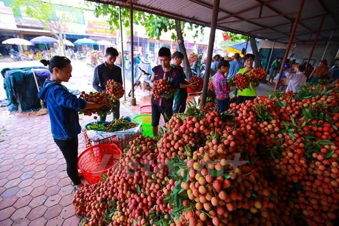 """Xuất khẩu 20 tỷ USD, nông sản, thực phẩm vẫn """"lép vế"""" trên thị trường"""