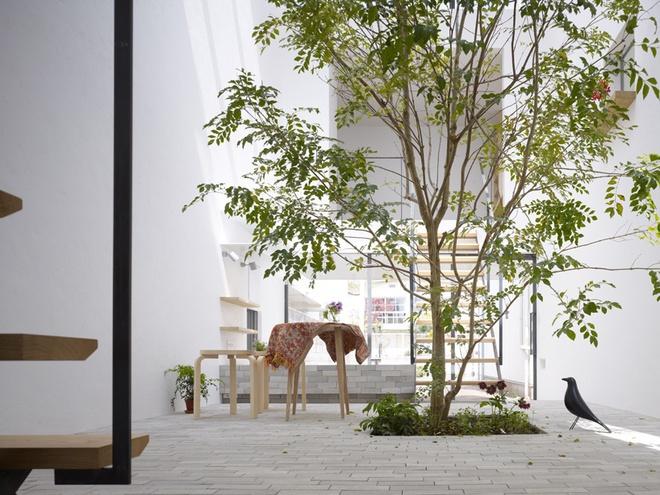Ngôi nhà ống 54m2 thiết kế ấn tượng với vườn cây giữa nhà