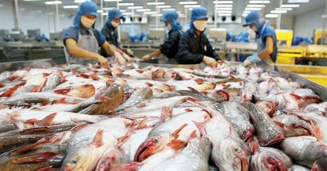"""Doanh nghiệp """"ôm"""" hàng chục tỷ đồng bỏ trốn, người nuôi cá tra lao đao"""