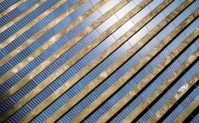 Thành Thành Công tính đầu tư 1 tỷ USD vào ngành điện mặt trời