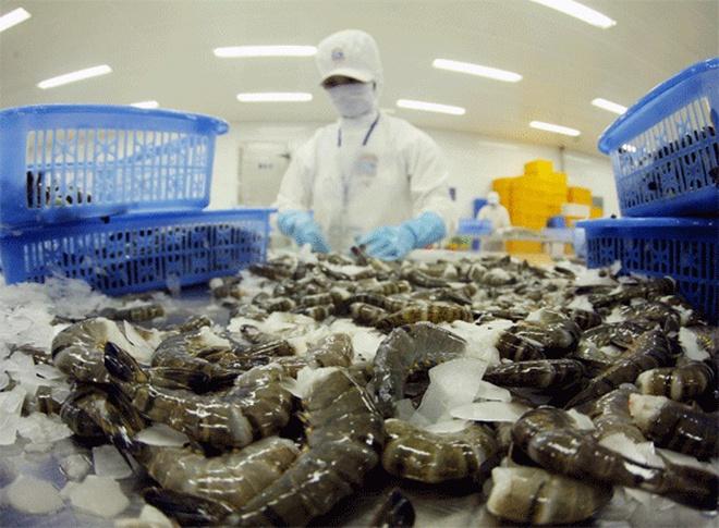 Úc phản hồi về lệnh cấm nhập khẩu tôm