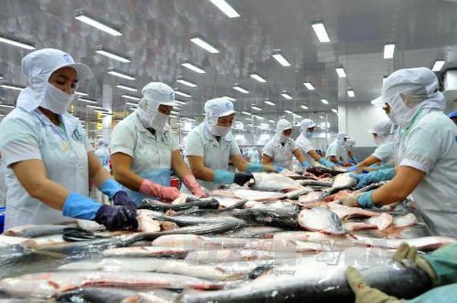 Xuất khẩu cá tra sang Trung Quốc tăng mạnh