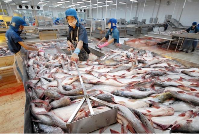 Thủy Hải Sản Việt Nhật: ĐHCĐ không thông qua BCTC do phát hiện số liệu đã bị lập giả để chiếm đoạt hơn 155 tỷ đồng