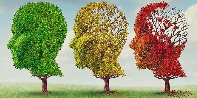 Di truyền học và khả năng chống lão hóa của Ginsenosides