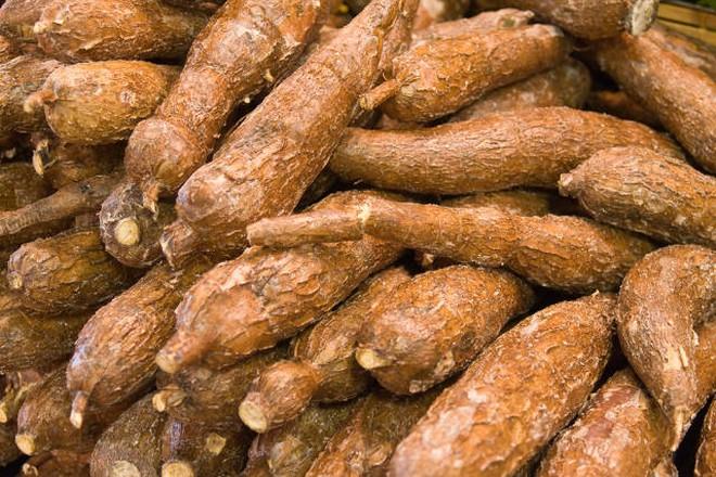 Kiểm soát chặt sắn tươi nhập khẩu từ Campuchia, Lào