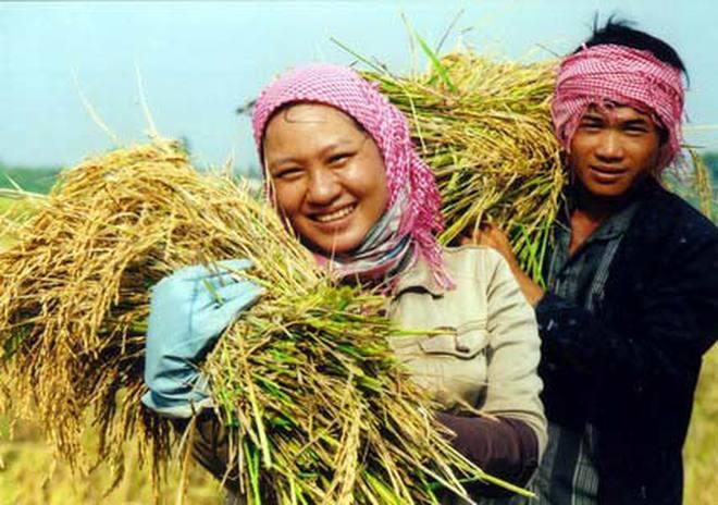 """Bộ Công thương chính thức """"cởi trói"""" cho hạt gạo"""