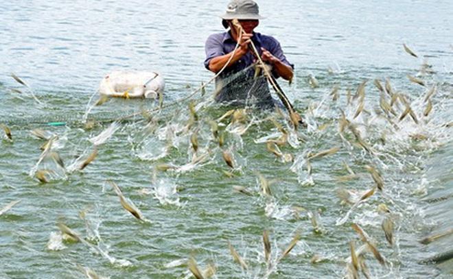 Các yếu tố quyết định cho phát triển ngành tôm