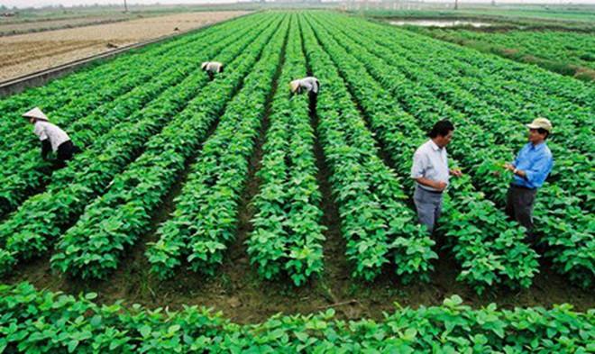 Nông dân 'bó gối' vì thiếu vốn sản xuất