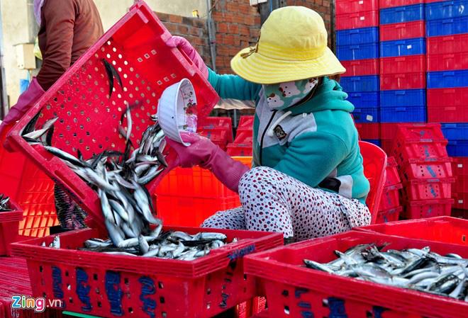 Ngư dân Quảng Ngãi trúng đậm cá nục suông đầu năm