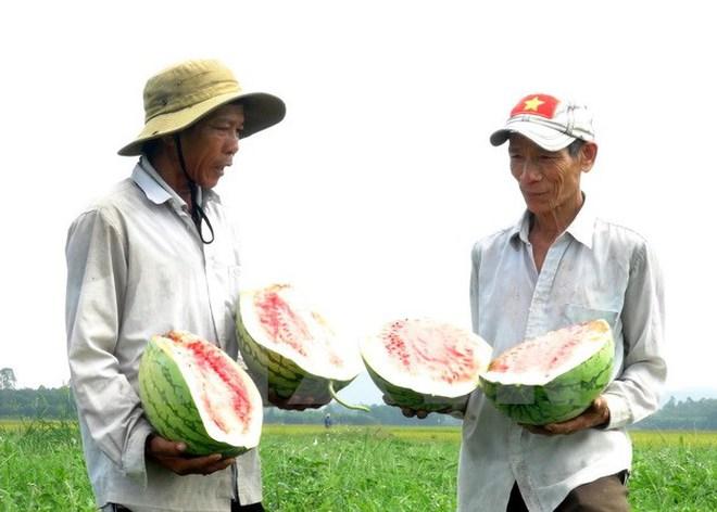 Bài toán tìm đầu ra giúp các mặt hàng nông sản thoát ế