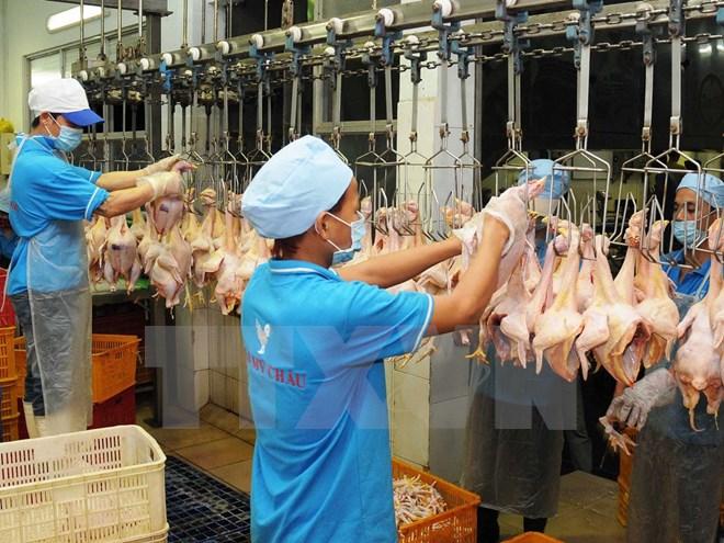 Thịt gà Việt Nam gian nan tìm đường xuất khẩu sang Nhật, EU