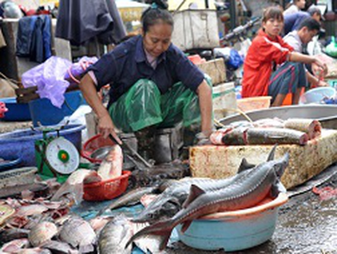 Chợ cá đầu mối ở Hà Nội đang bán cá nhập về từ đâu?