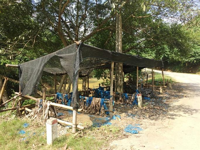 Giá chuối 1.000 đồng/kg, dân chán nản không muốn thu hoạch - Ảnh 3.